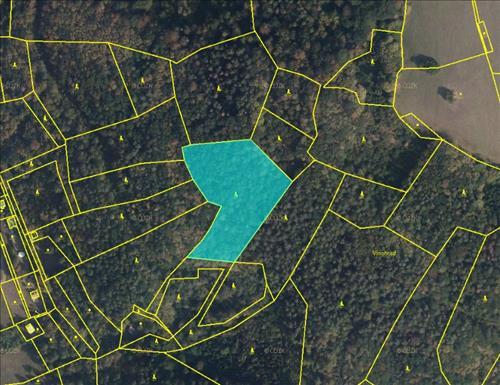 Prodej 1/2 lesa o výměře 8431m2, k.ú. Doubravník, okres Brno-venkov